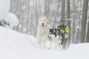 2015-02高山ワンパラプロ (171)