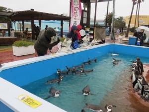 2015-03-01南知多 (36)