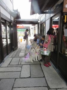 20150321琵琶ワン (244)