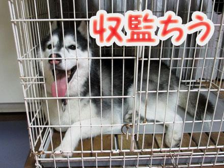犯犬すふれ