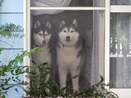 窓辺のおふたりさん