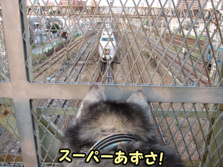 暑くても電車観察