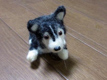 犬毛ドッグ