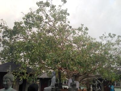 Lanka2014_09_13.jpg