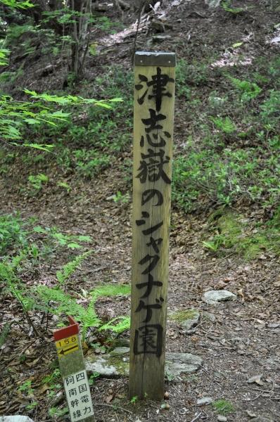 s-津子嶽ピクチャ 055_01