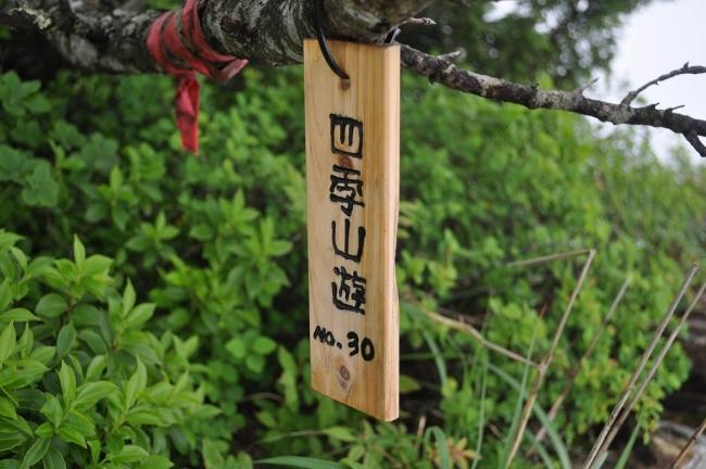 s-東赤石山ピクチャ 092_01