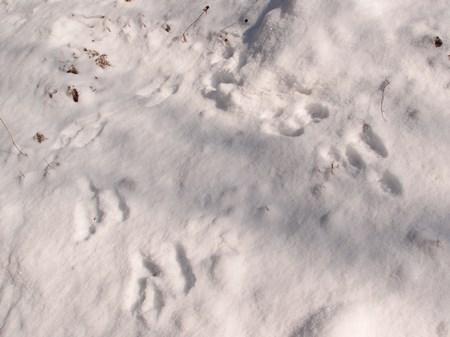 うさぎの足跡