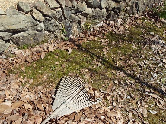 落ち葉の下は春