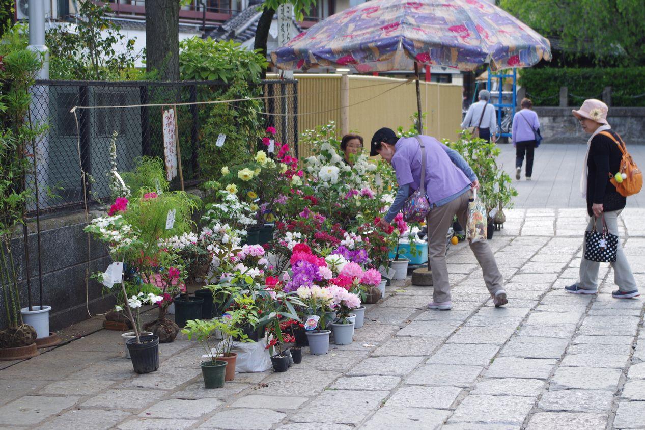 西新井大師花まつり_牡丹_藤の花_芍薬_2015年5月