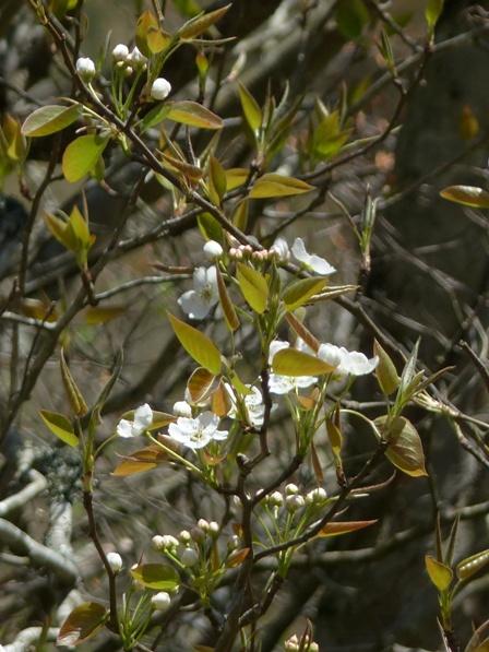 皿ヶ嶺 ? 木の花 2