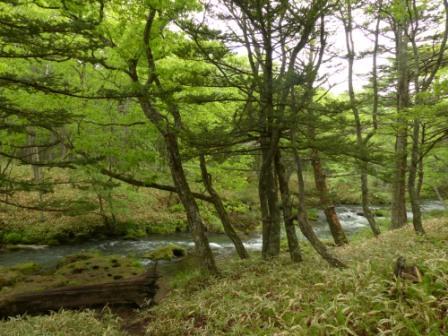 奥日光 湯川 1