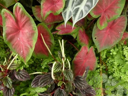 あしかがフラワーパーク 観葉植物の花 2