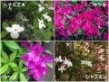 我が家の春の花
