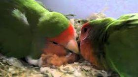 Love Birds wonderful pets!_fc2