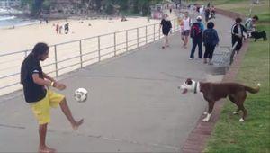 Brazilian dog_fc2