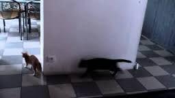 Viral Spiral Cat Game fail ! (Original)_fc2