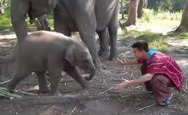 Baby Elephant Loves Cuddling with Arthur (Original)_fc2