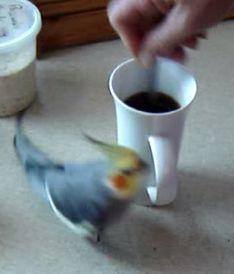 Bird makes coffee_fc2