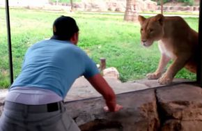How to play with lions at the zoo_fc2