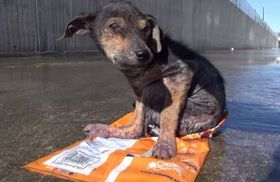 A brave little dog gets rescued from the river His recovery will inspire you Please share_fc2