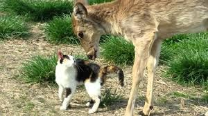 Cat and Whitetail Deer Bath_fc2
