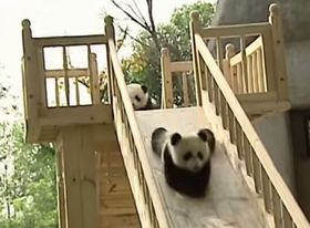 Cute pandas playing on the slide_fc2