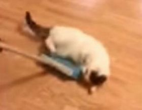 Man sweeps cat off the floor_fc2