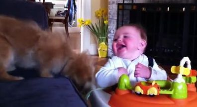 Puppies and Babies Playing Together Compilation 2014 [NEW HD]