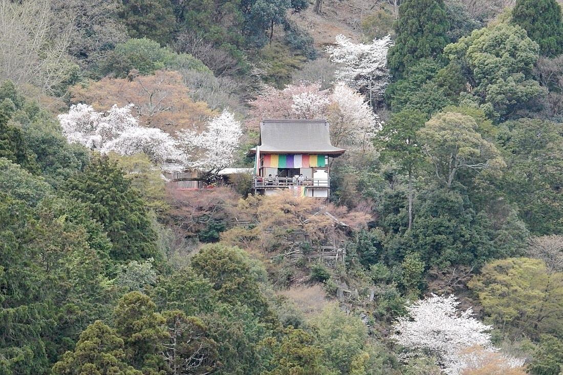嵐山桜 042