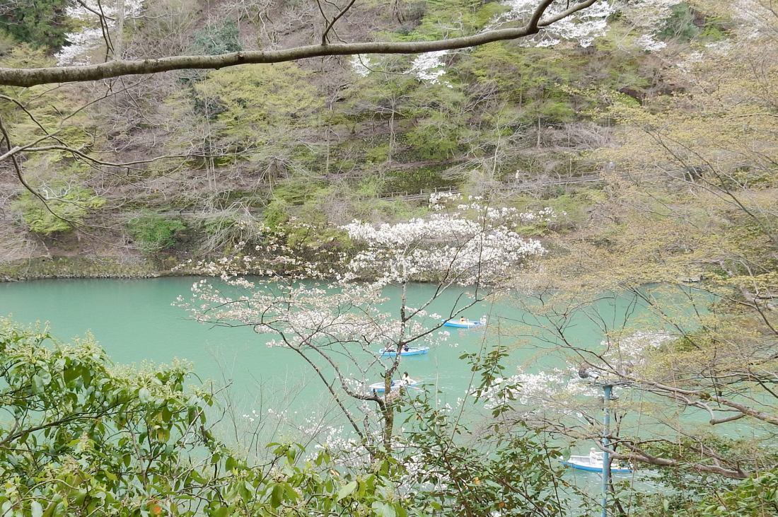 嵐山桜 047