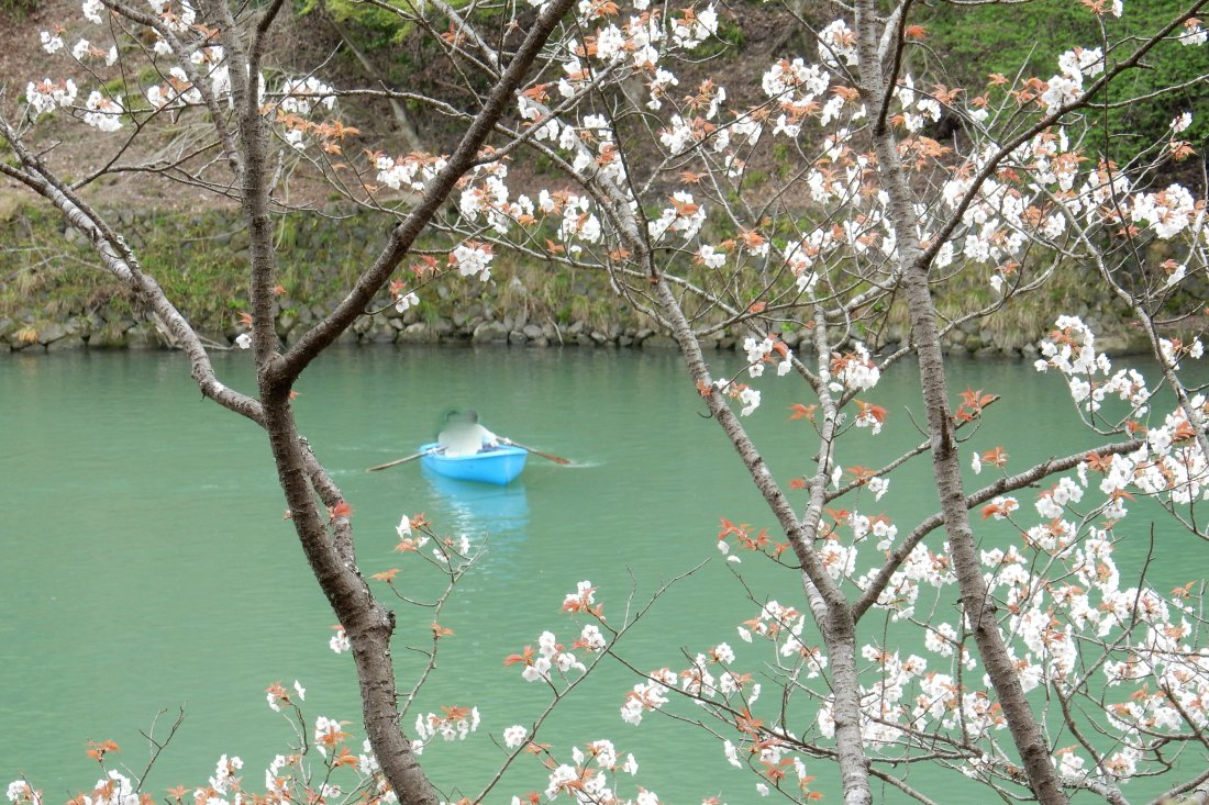 嵐山桜 055