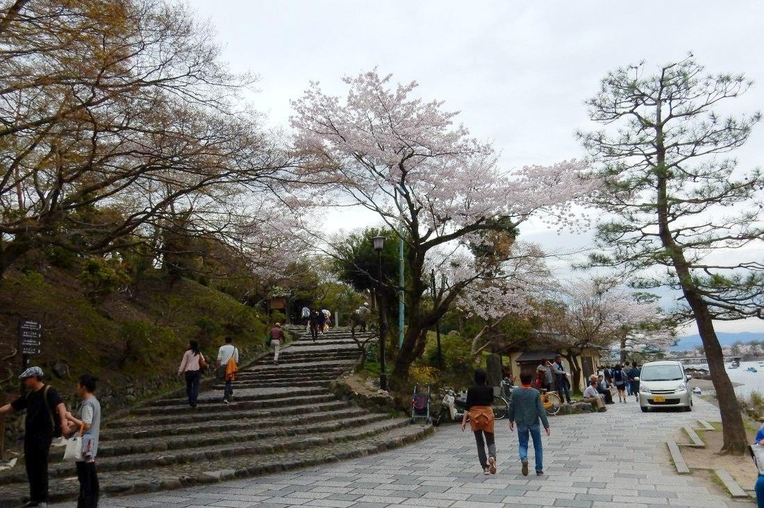嵐山桜 064