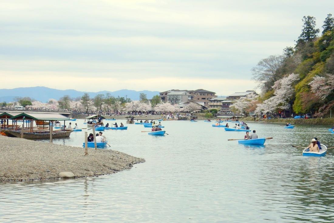 嵐山桜 070