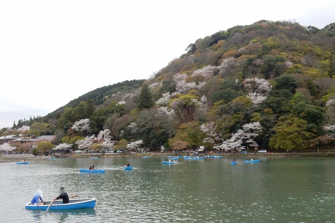 嵐山桜 085