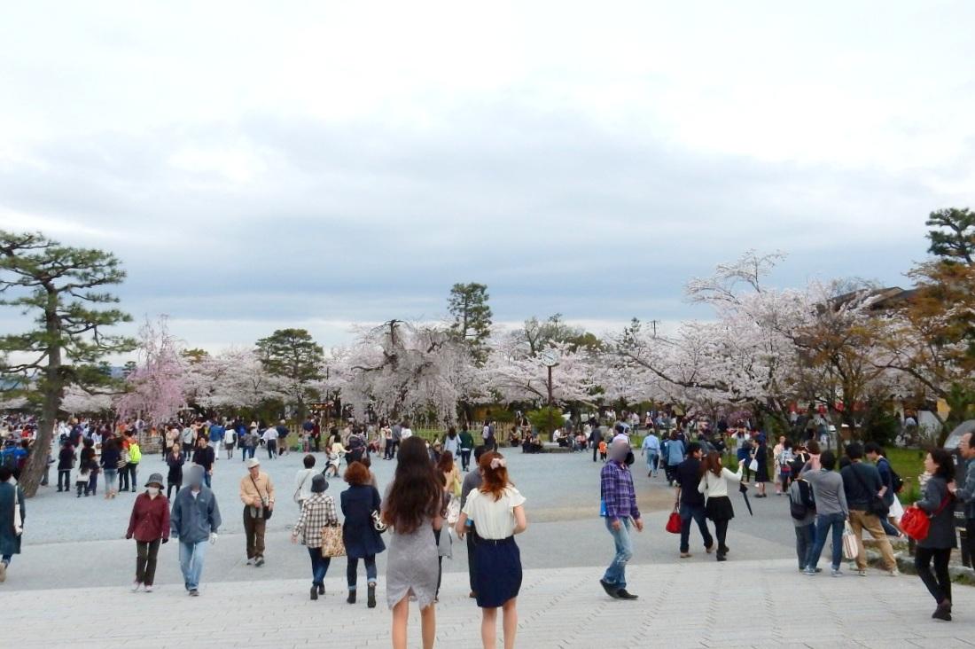 嵐山桜 105