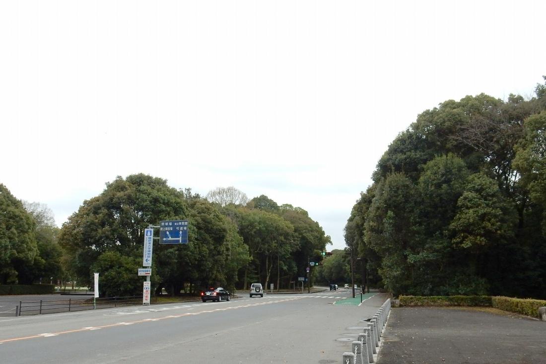 斑鳩橿原神宮 181