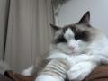 cat2014123003.jpg