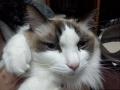 cat2015012400.jpg