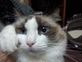 cat2015012401.jpg