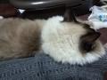 cat2015012402.jpg