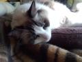 cat2015020300.jpg