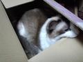 cat2015021500.jpg