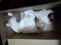 cat2015021501.jpg