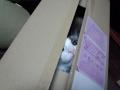 cat2015021502.jpg