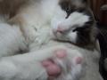 cat2015031601.jpg
