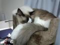 cat32014123000.jpg