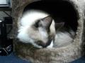 cat32014123002.jpg