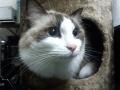 cat32014123004.jpg
