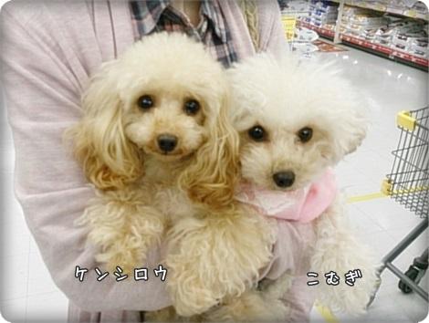 20150411ケン&こみゅ2