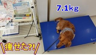 犬太郎体重